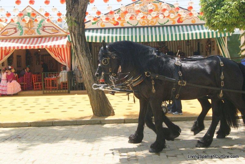Feria de Sevilla,Spain,Espagne,percheron horses (2)