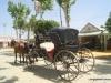 Feria de Sevilla,Spain,Espagne,carriages,voitures (1)