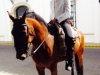 Feria de Sevilla,Spain,Espagne,horseman,cavalier (2)
