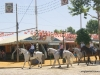 Feria de Sevilla,Spain,Espagne,horseman,cavalier (6)