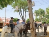 Feria de Sevilla,Spain,Espagne,horseman,cavalier (8)