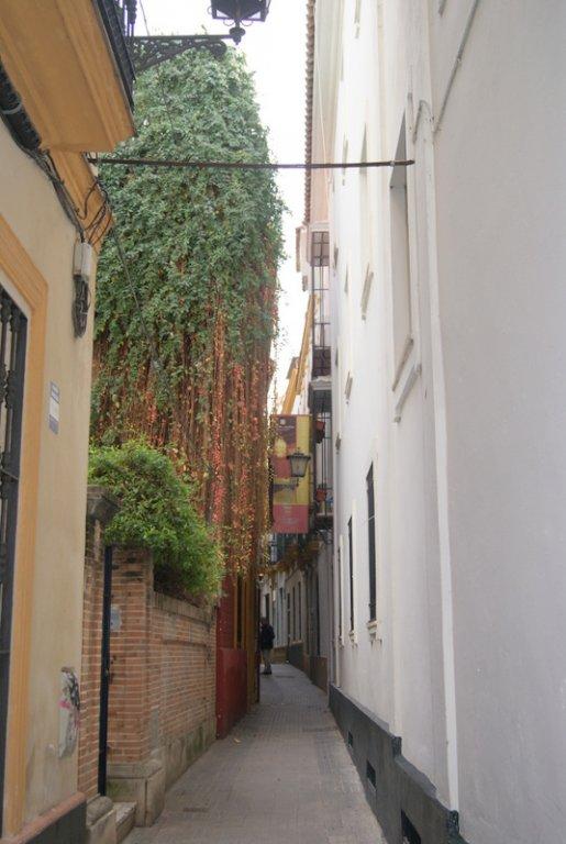 Santa Cruz, Sevilla