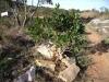 mediterranean-flora-1_0
