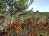 mediterranean-flora-in-valencia