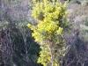 mediterranean-flora