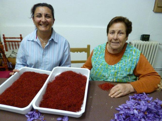 Spanish Saffron. La Mancha,Spain,Cultivation & harvesting (26)