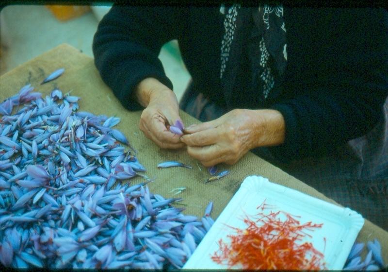 saffron-pruning-1