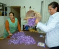 Spanish Saffron. La Mancha,Spain,Cultivation & harvesting (12)