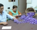 Spanish Saffron. La Mancha,Spain,Cultivation & harvesting (16)