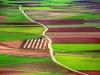 consuegra fields