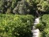walking-through-san-vicentes-orange-groves-and-gardens