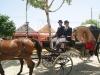 Feria de Sevilla,Spain,Espagne,carriages,voitures (6)