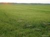 la-albufera-rice-fields-1