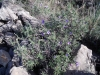 mediterranean-flora-in-valencia-1