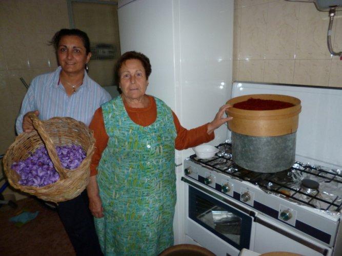 Spanish Saffron. La Mancha,Spain,Cultivation & harvesting (10)