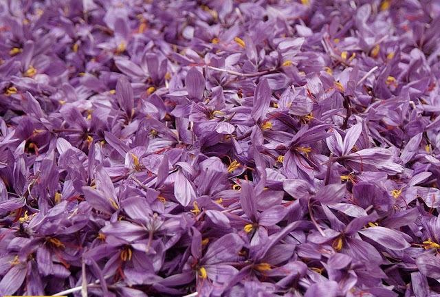 la-mancha-saffron