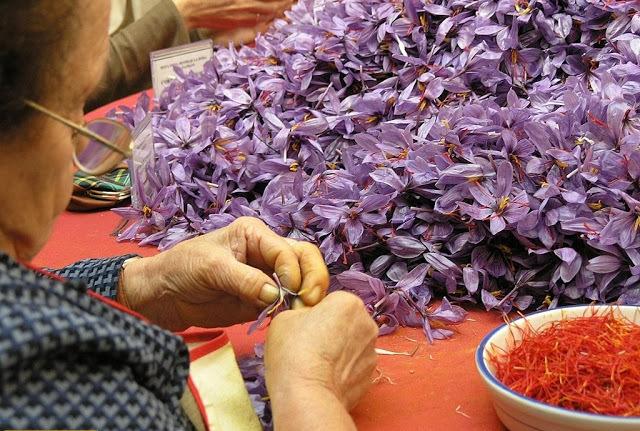 saffron-pruning-2
