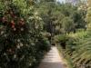 san-vicentes-orange-grove-and-gardens-1